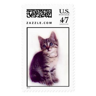 Blue Eyed Kitten Stamp