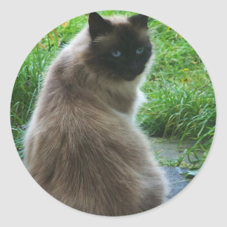 Blue Eyed Kitty Cat Sticker