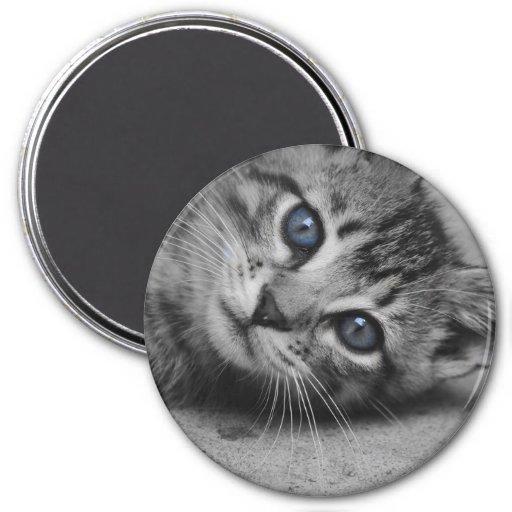 Blue Eyed Kitty Magnet