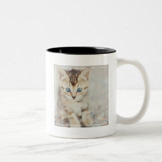 Blue Eyed Kitty Two-Tone Coffee Mug