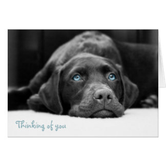 Blue Eyed Labrador Black And White Photo Cards