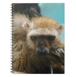 Blue Eyed Lemur Notebook