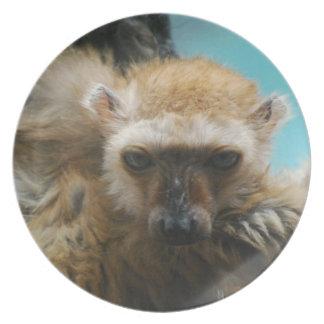 Blue Eyed Lemur Plate