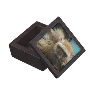 Blue Eyed Lemur Premium Gift Box