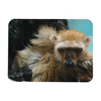 Blue Eyed Lemur Premium Magnet Magnet