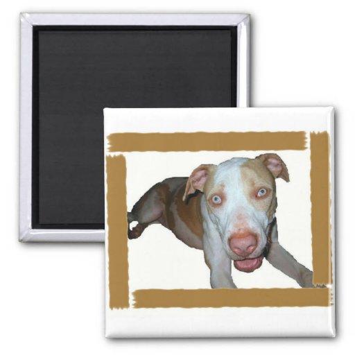 Blue eyed pitbull magnet