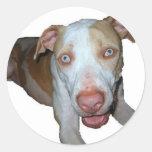 blue eyed pitbull sticker