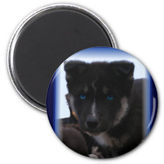 Blue-eyed pup magnets