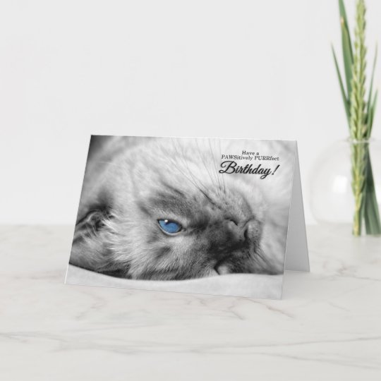 Blue Eyed Siamese For Cat Lovers Birthday Card