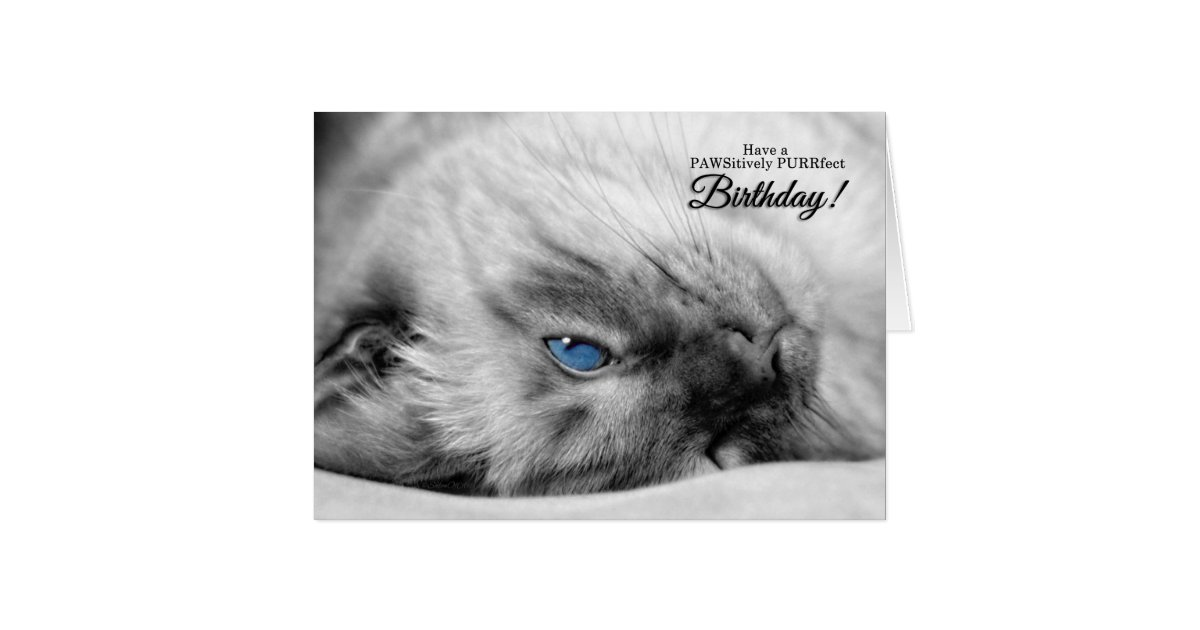 blue eyed siamese for cat lover u0026 39 s birthday card