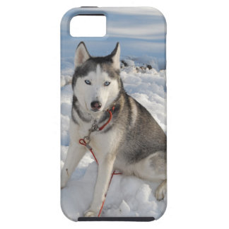 Blue-eyed Siberian Husky sitting in mounds of snow iPhone SE/5/5s Case