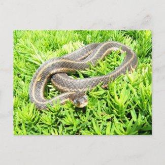 Blue eyed snake ~ postcard postcard