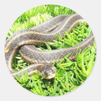 Blue Eyed Snake ~ sticker