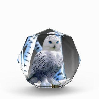 Blue-eyed Snow Owl Acrylic Award