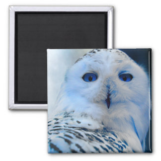 Blue Eyed Snow Owl 2 Inch Square Magnet