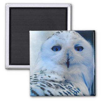 Blue Eyed Snow Owl Magnet