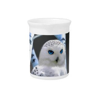 Blue-eyed Snow Owl Pitcher