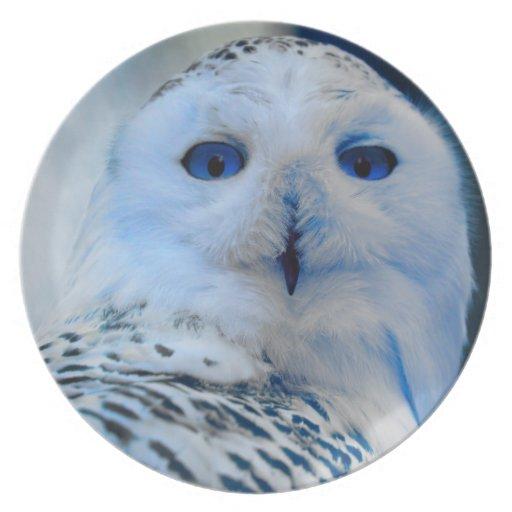 Blue Eyed Snow Owl Plate