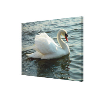 Blue eyed swan Stretched Canvas Print