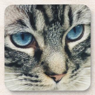 Blue-eyed Tabby Cat Face Close-up Coaster
