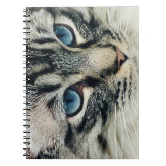 Blue-Eyed Tabby Cat Face Close-up Notebook