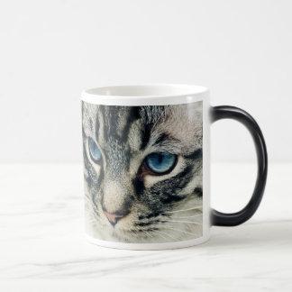Blue-Eyed Tabby Cat Face Morphing Mug Coffee Mugs