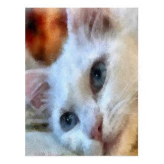 Blue Eyed White Cat Postcard
