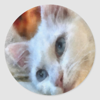 Blue Eyed White Cat Stickers