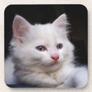 Blue eyed white kitten coaster