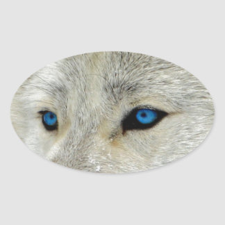 Blue Eyed White Wolf Oval Sticker