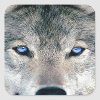 Blue Eyed Wolf Square Sticker