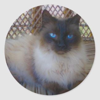Blue Eyes Kitty Collection Classic Round Sticker