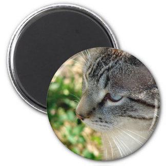 Blue Eyes Kitty Magnet