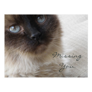 Blue Eye's Kitty Missing Your Postcard