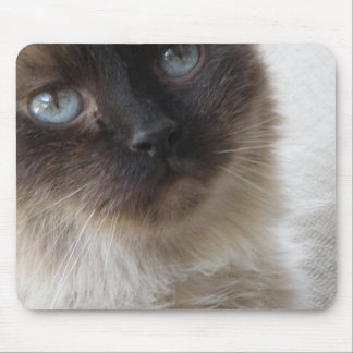 Blue Eye's Kitty Mousepad