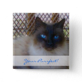 Blue Eyes Kitty Your Purrrfect Button button
