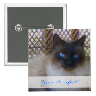 Blue Eyes Kitty Your Purrrfect Button