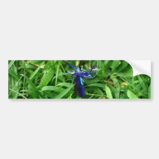 Blue Feather On Grass Bumper Sticker