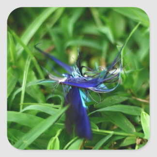 Blue Feather On Grass Square Sticker