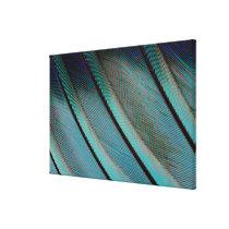 Blue feather pattern canvas print