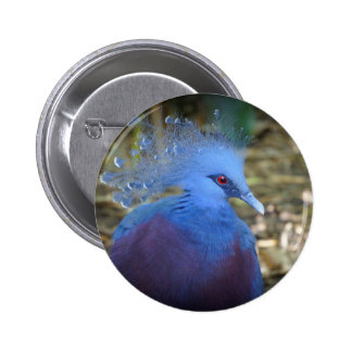 Blue Feathered Beauty Pinback Buttons