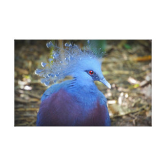 Blue Feathered Beauty Canvas Print