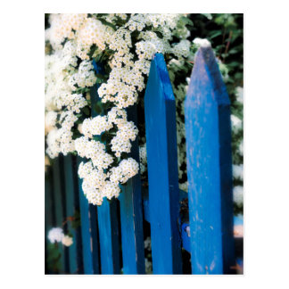 Blue fence with white flowers postcard