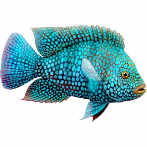 Blue Fish Key Chain Acrylic Cut Outs