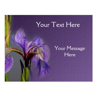 Blue Flag Iris Flower Postcard