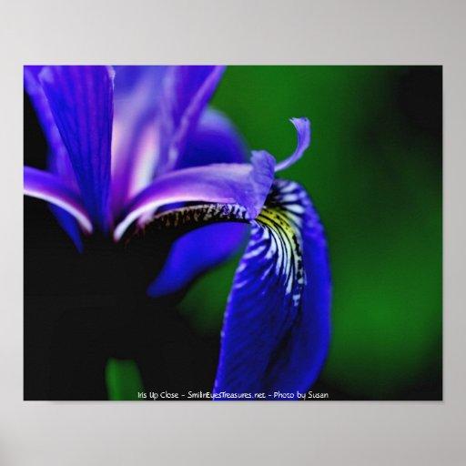 Blue Flag Iris Macro Flower Photography Poster