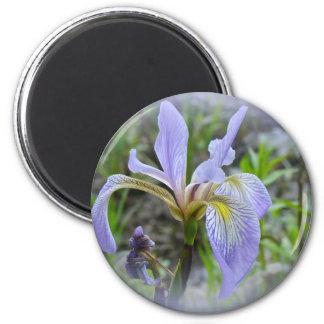 Blue Flag - Wild Iris Magnet