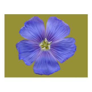 Blue Flax #1 Postcard