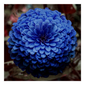 Blue Flower Close Up Photo Poster