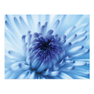 Blue flower Close Up Postcard